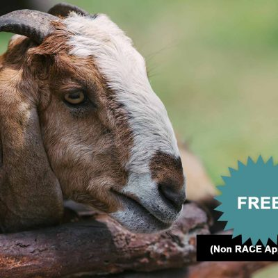 Top 10 Things You Need To Know About Goat Pneumonia
